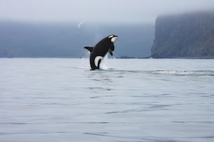 SAP hints at 'Project Orca' analytics launch