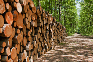 CHH uses SAP BPC to manage 'green' forestry credits